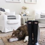 Rain boots and a lazy puppy about sums up thishellip