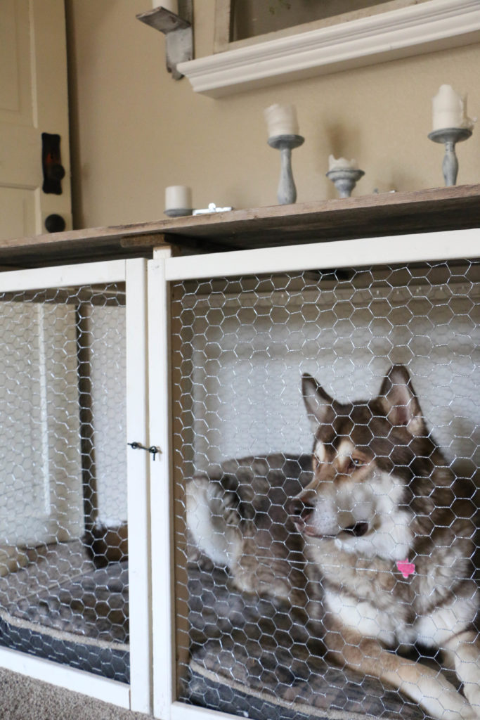 dog-crate-7